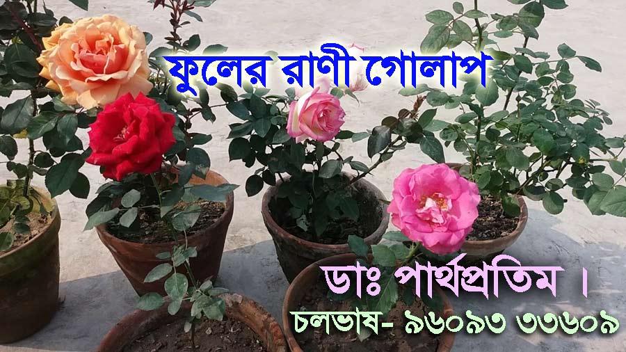 এত্ গন্ধ পুষ্পে - ফুলের রাণী